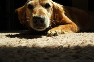 My dog Rosie.